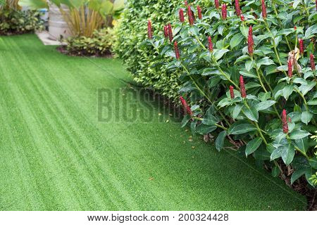 pathway in garden with green treeplantgrass.home.copy space