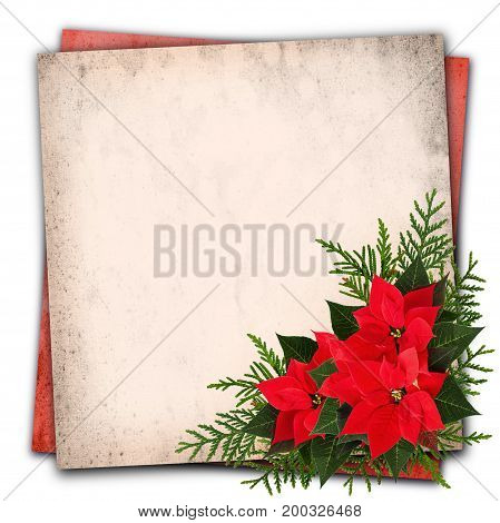 Christmas red poinsettia flowers arrangement on grunge paper background