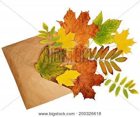 Opened craft paper envelope with scattered dry autumn leaves isolated on white background