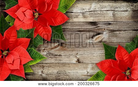 Christmas poinsettia flowers on old wooden background. Flat lay. Top view.