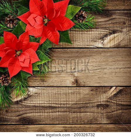 Red poinsettia flowers and Christmas tree branches on old wooden background. Holiday arrangement. Flat lay. Top view.