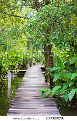 Long wooden  path in a tropical forest.Walkway through the treetops in a rain forest.Wooden path in a tropical forest nature.