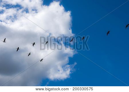 Ducks fly in formation on a cloudy blue Summer sky over the Woodstock concert grounds in Bethel NY.