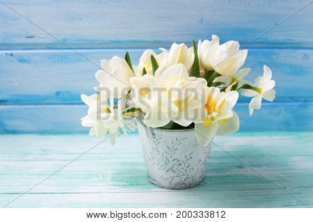 Bright white daffodils and tulips flowers in bucket on turquoise painted wooden planks against blue wall. Selective focus.