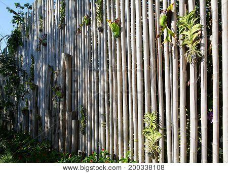 Bamboo fence in Phuket botanic garden of Phuket