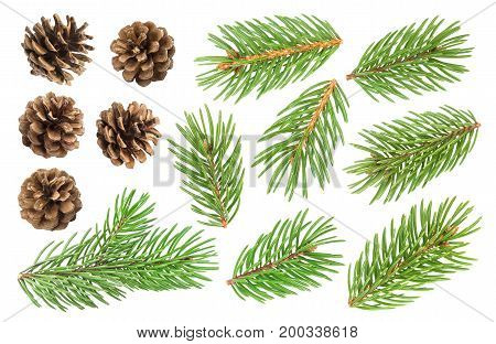 Fir tree branch and pine cones isolated on white background with clipping path