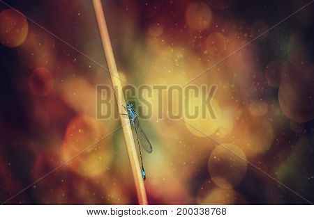 Azure damselfly in fire space. Wildlife and nature. Blurred and colorful background. Yellow and red bokeh background. Art.