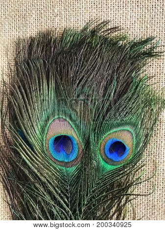 Two peacock feathers giving impression of pair of blue eyes on hessian background