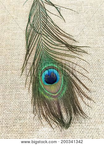 Beautiful colors of a single peacock feather on hessian background