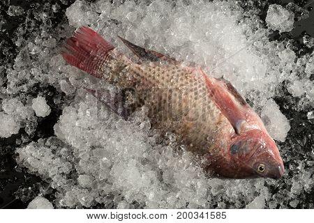 Fresh Nile Tilapia Mango Fish Nilotica Fish On Ice And Black Background