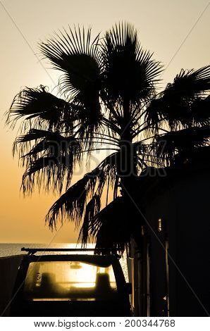 Old car under the palm at summer sunset on a beach in Greece