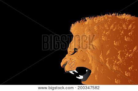 Lion head vector illustration on black background