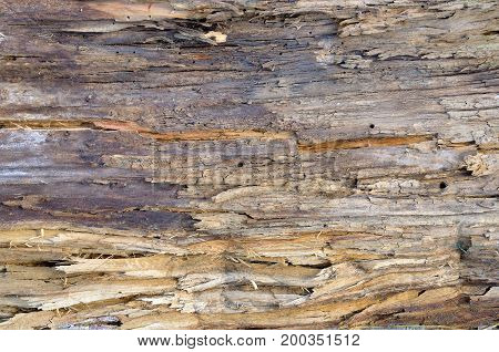 A fragment of an old rotten board as an abstract background