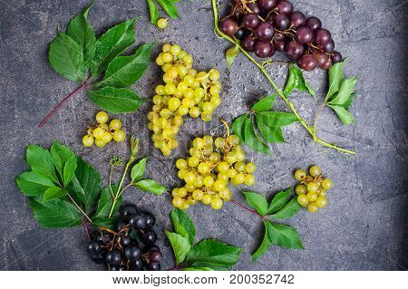 Top View Composition Of Various Grapes: Red, White And Black Berries And Green Leaves With Water Dro