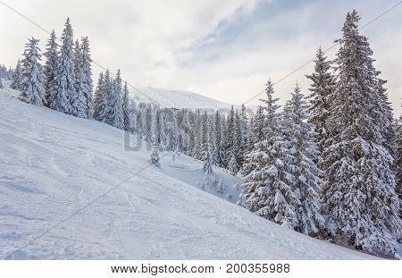Trees Covered By Snow On Mountain Hill.