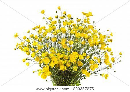 Bouquet of yellow buttercaps isolated a white background.