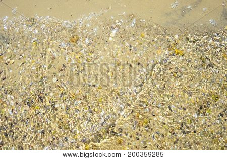 Beach sand and shells background texture. Sea shore.