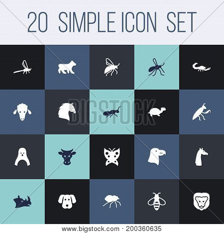 Collection Of Diver, Polar, Herculeanus And Other Elements.  Set Of 20 Zoo Icons Set.
