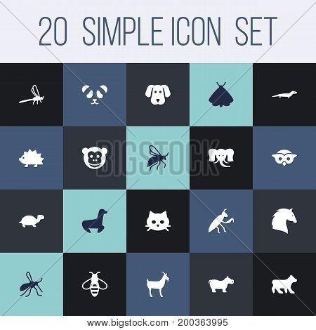 Collection Of Ape, Gnat, Gecko And Other Elements.  Set Of 20 Zoo Icons Set.