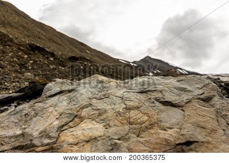 Fossil leaves found in the moraine next to Longyearbreen, a glacier on Spitsbergen, Svalbard island Norway. Fossils lying open in the landscape. Mountains soft background