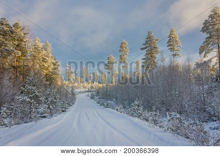Snow covered norwegian road and pine forest with dramatic light and sky in Finnskogen, Hedmark