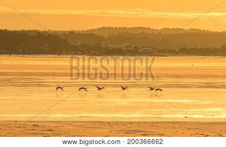 Winter landscape with whooper swans flying over the ice covered sea, ocean, ice, blue sky, road with snow, sunshine. Norway, Fredrikstad, Nature Reserve.