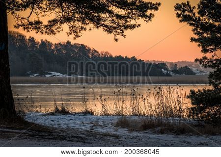 Winter landscape in pink morning light with view of the ocean through pine trees. Norway, Fredrikstad