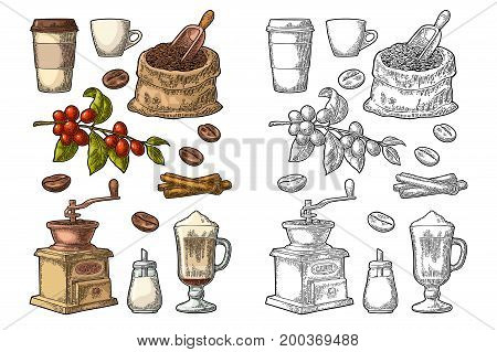 Glass latte sack beans wooden scoop hand-held coffee grinder sugar scoop cinnamon stick branch with leaf and berry. Vintage color vector engraving illustration isolated on white background
