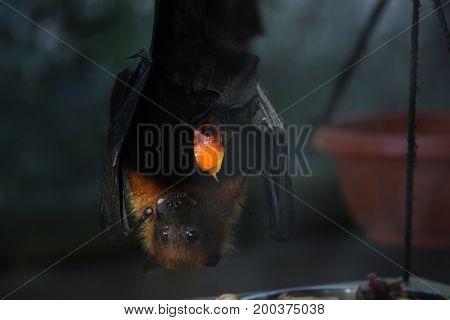 Bat in safari in Ramat Gan