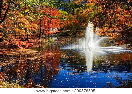 Colorful autumn trees in the forest with small pool