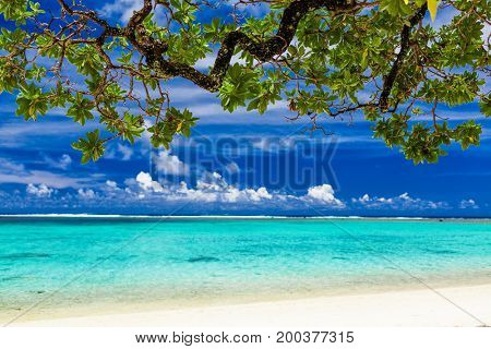 Pristine beach on tropical island during sunny day framed by a tree with green leaves