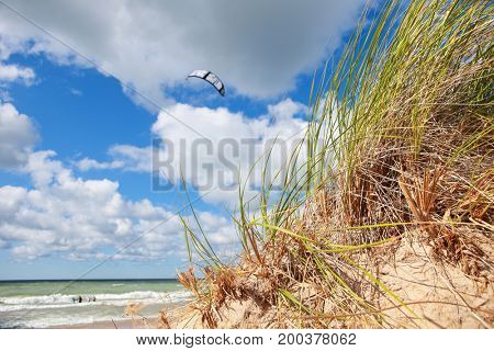 Beach grasses on the seashore with kite in background