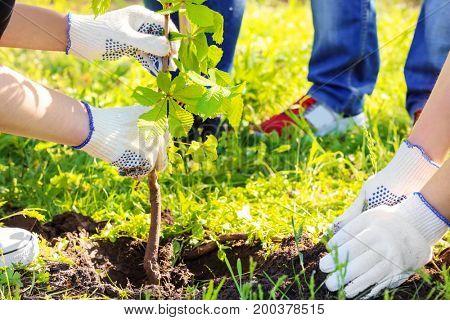 Young volunteers planting tree in park