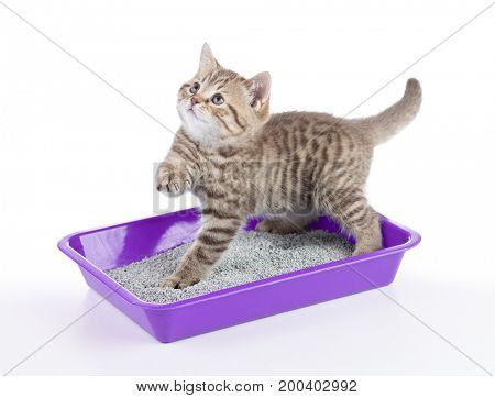 cat in toilet tray box with litter isolated