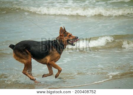 Beach Dog. Though not all dogs are natural swimmers, most would enjoy playing on the shore line