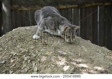 A young cat rubs against the stone surface of the hillock.