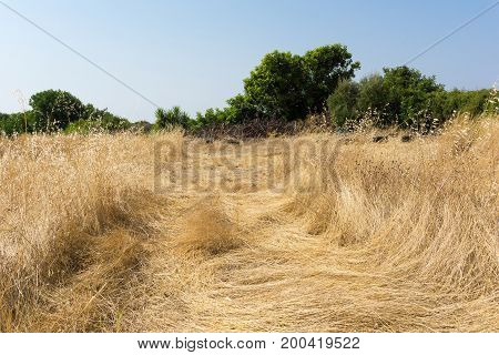 View on a dried up Field on a hot Day. Close-up of a dried up Vegatation in Summer. Natural Background