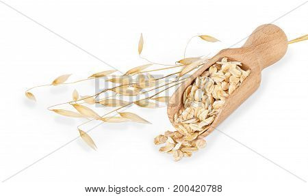 oat flakes in scoop and ripe oat ears isolated on white background with clipping path. Uncooked oatmeal