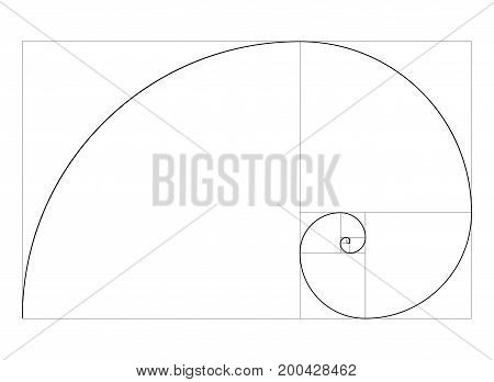 golden ratio template vector  spiral  symbol template