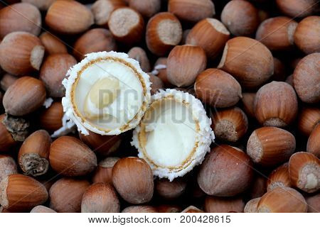 White Bonbon On A Hazelnut. Fresh Organic Filbert