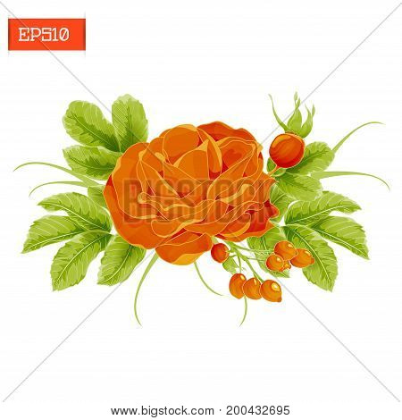 Floral composition. Realistic orange rose flower with leaves and rosehip berries. Vector illustration. Isolated