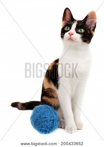 Cute Kitten Playing Blue Clew Of Thread, Isolated On White Background.little Cat