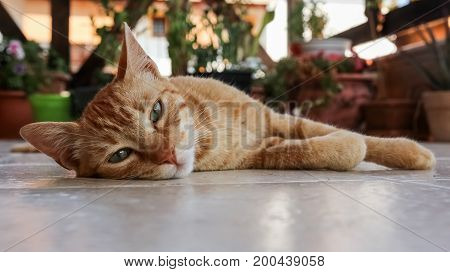 A cat lying on the floor at a balcony with a lot of flower pots at the background.
