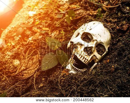 Human skull buried in the soil.The skull has dirt attached to the skull.concept of death and Halloween
