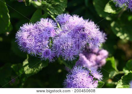 Beautiful lilac flower for screen saver, calendar, postcard.