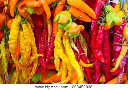 Collection of the dry chili pepper (natrural herbal food spices)