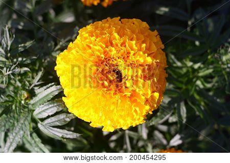 A beautiful yellow flower for a screen saver, calendar, postcard.