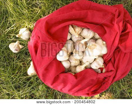 Garlic bag autumn, summer, harvest heap, herb, organic