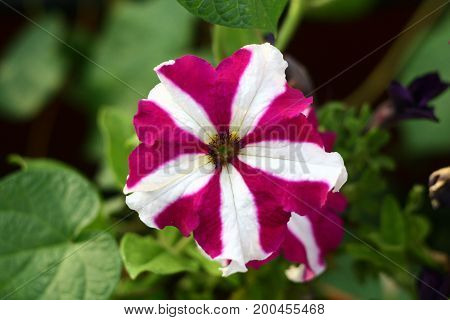 An interesting and very beautiful striped flower is a great background.