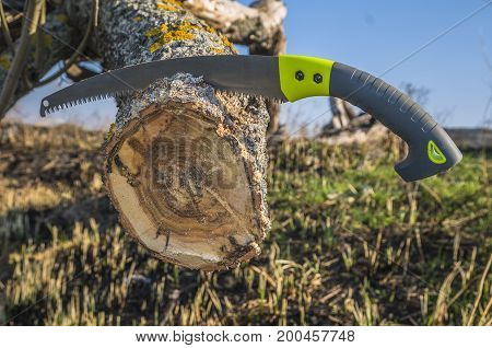 Cutting Old Branch Of Tree. Pruning Trees In Garden By A Hacksaw